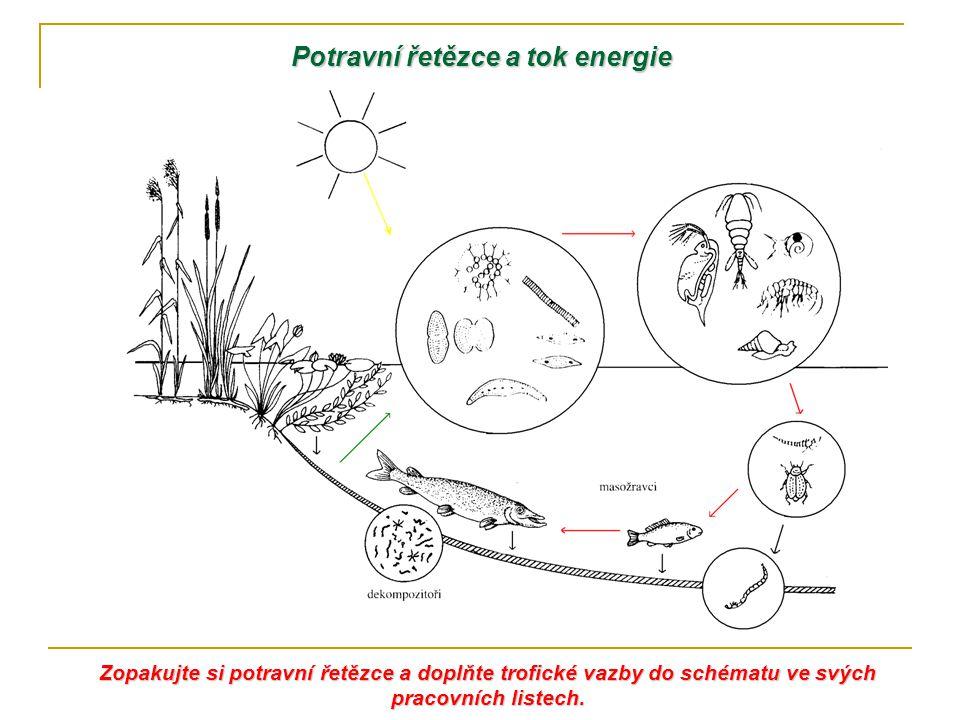 Potravní řetězce a tok energie Zopakujte si potravní řetězce a doplňte trofické vazby do schématu ve svých pracovních listech.