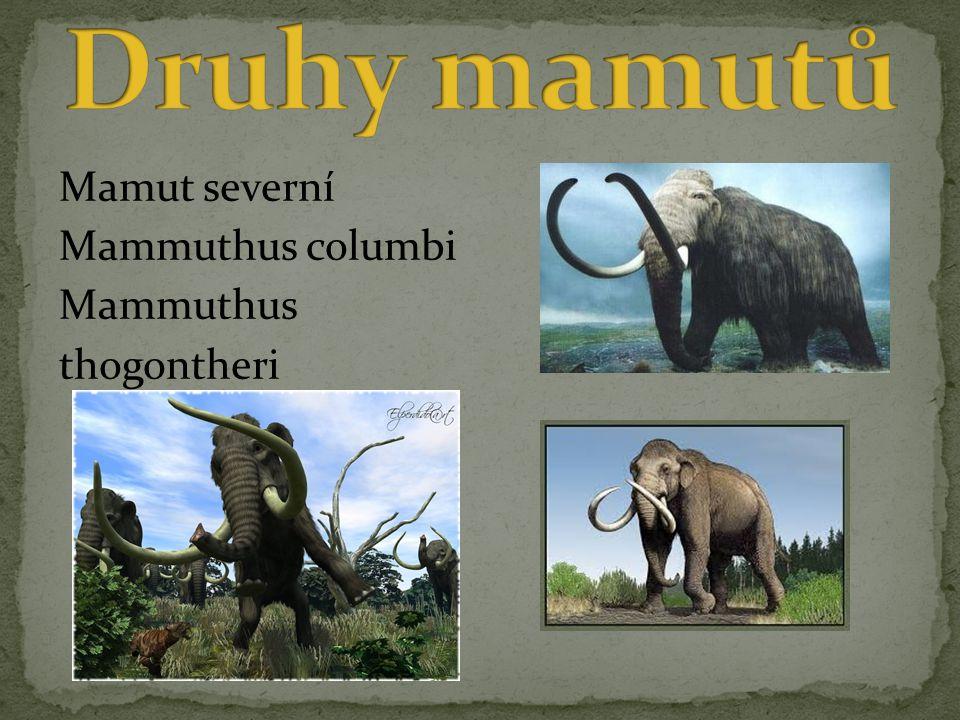Mamut severní Mammuthus columbi Mammuthus thogontheri