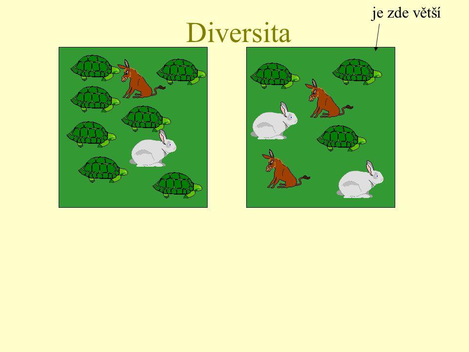 Diversita je zde větší