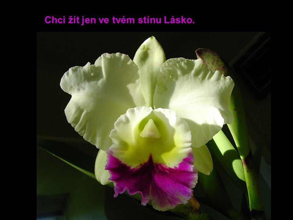 Láska lásce přináší květy.