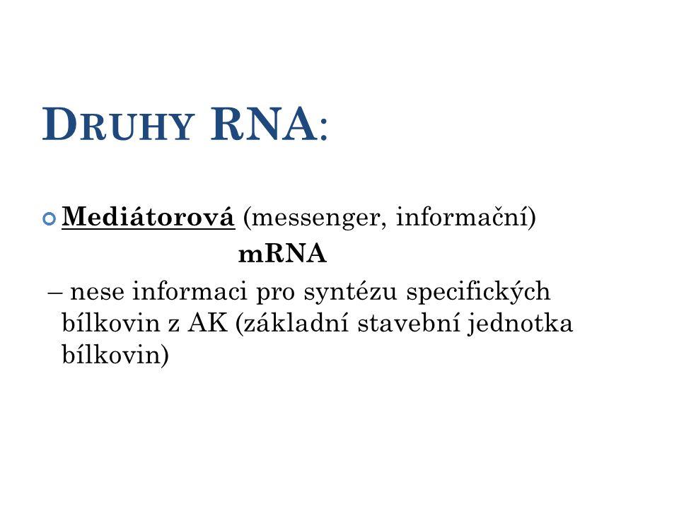 D RUHY RNA : Mediátorová (messenger, informační) mRNA – nese informaci pro syntézu specifických bílkovin z AK (základní stavební jednotka bílkovin) 10