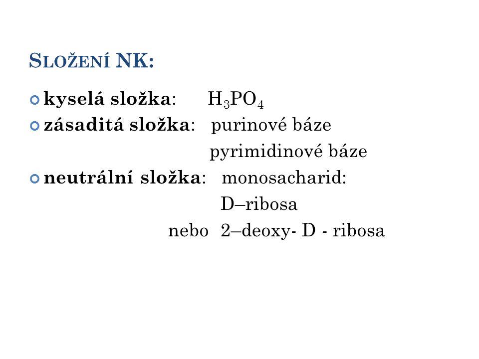 S LOŽENÍ NK: kyselá složka : H 3 PO 4 zásaditá složka : purinové báze pyrimidinové báze neutrální složka : monosacharid: D–ribosa nebo 2–deoxy- D - ribosa 4