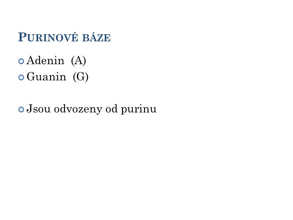 P URINOVÉ BÁZE Adenin (A) Guanin (G) Jsou odvozeny od purinu 5