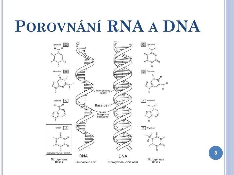 V ZNIK NK : Kondenzací pyrimidinové (purinové) báze, monosacharidu a H 3 PO 4 vznikne nukleotid Spojením nukleotidů vznikne polynukleotid = základ chemické struktury NK 9