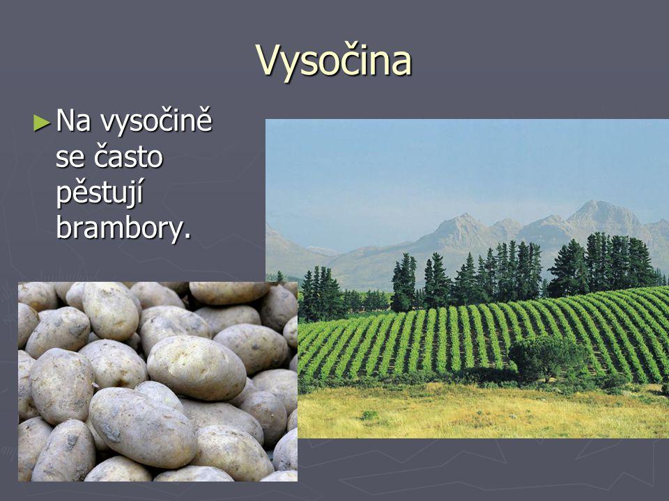 Vysočina ► Na vysočině se často pěstují brambory.