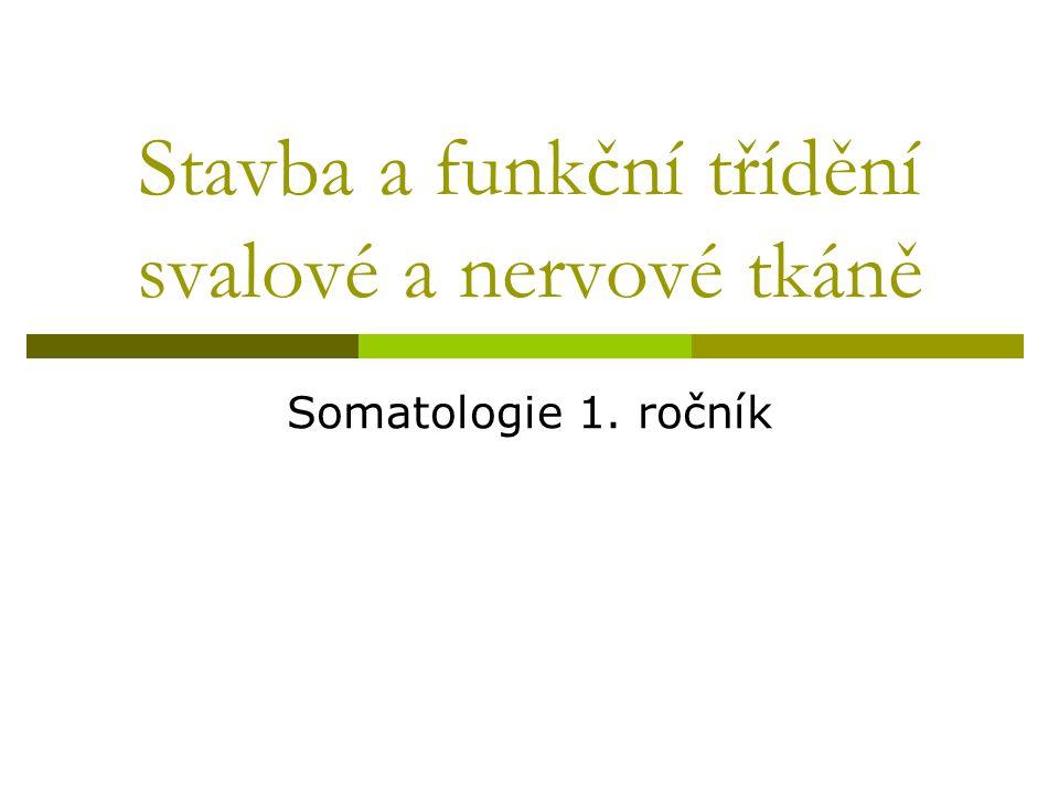 Stavba a funkční třídění svalové a nervové tkáně Somatologie 1. ročník