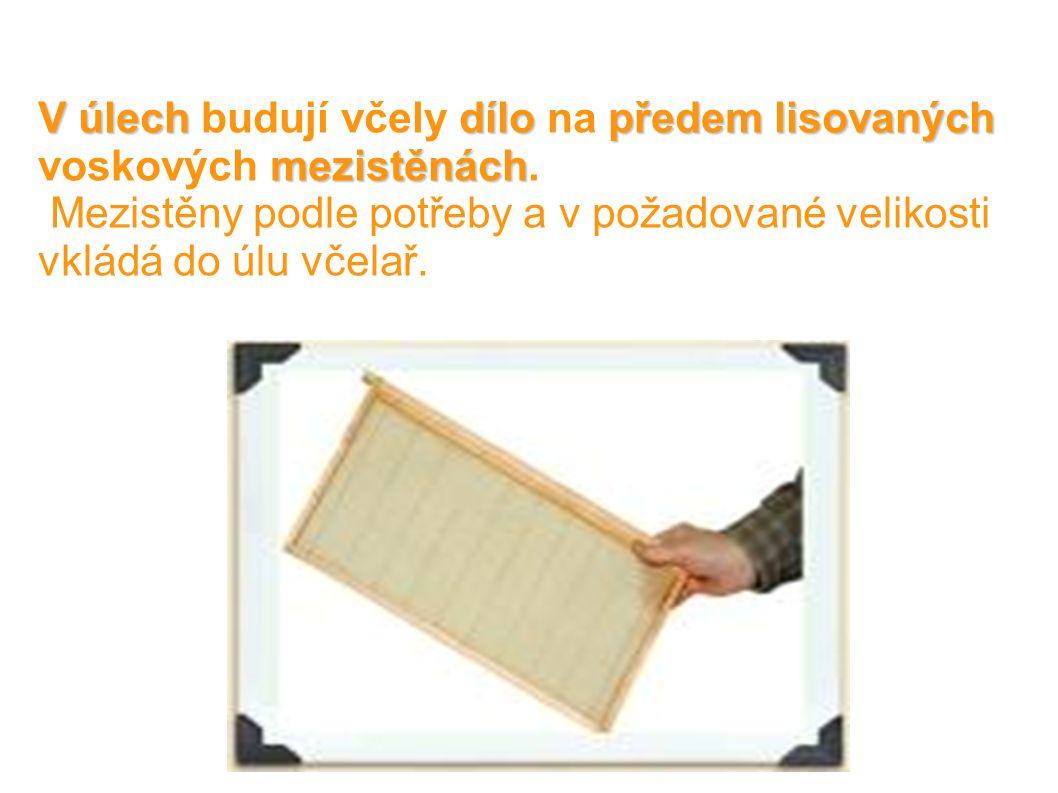 V úlechdílopředem lisovaných mezistěnách V úlech budují včely dílo na předem lisovaných voskových mezistěnách.