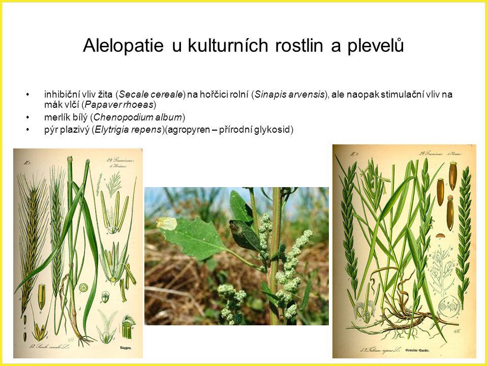 Alelopatie u kulturních rostlin a plevelů inhibiční vliv žita (Secale cereale) na hořčici rolní (Sinapis arvensis), ale naopak stimulační vliv na mák