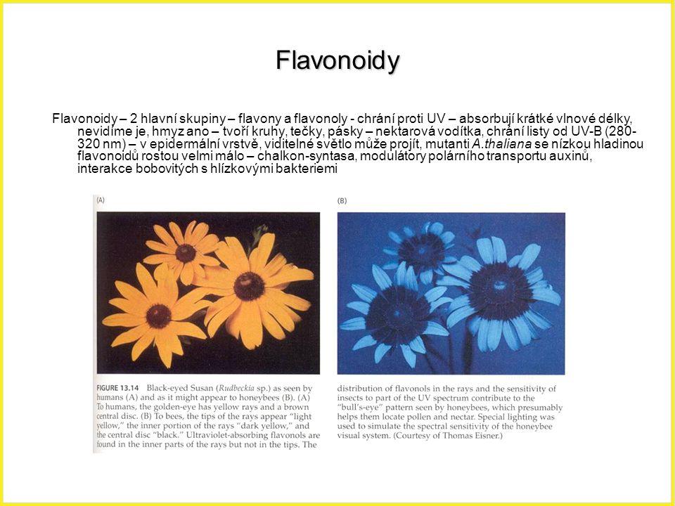 Flavonoidy Flavonoidy – 2 hlavní skupiny – flavony a flavonoly - chrání proti UV – absorbují krátké vlnové délky, nevidíme je, hmyz ano – tvoří kruhy,