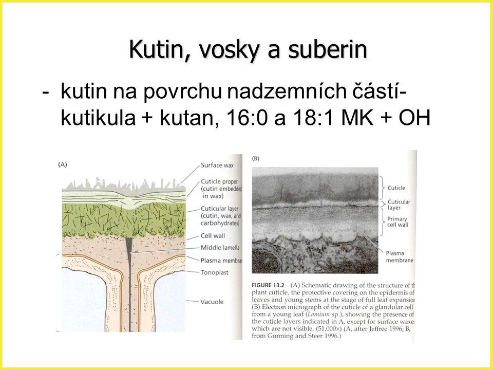 Kutin, vosky a suberin -kutin na povrchu nadzemních částí- kutikula + kutan, 16:0 a 18:1 MK + OH