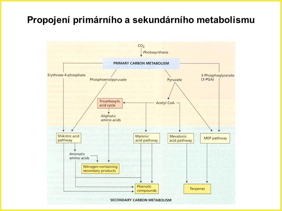 Biosyntéza kyseliny jasmonové