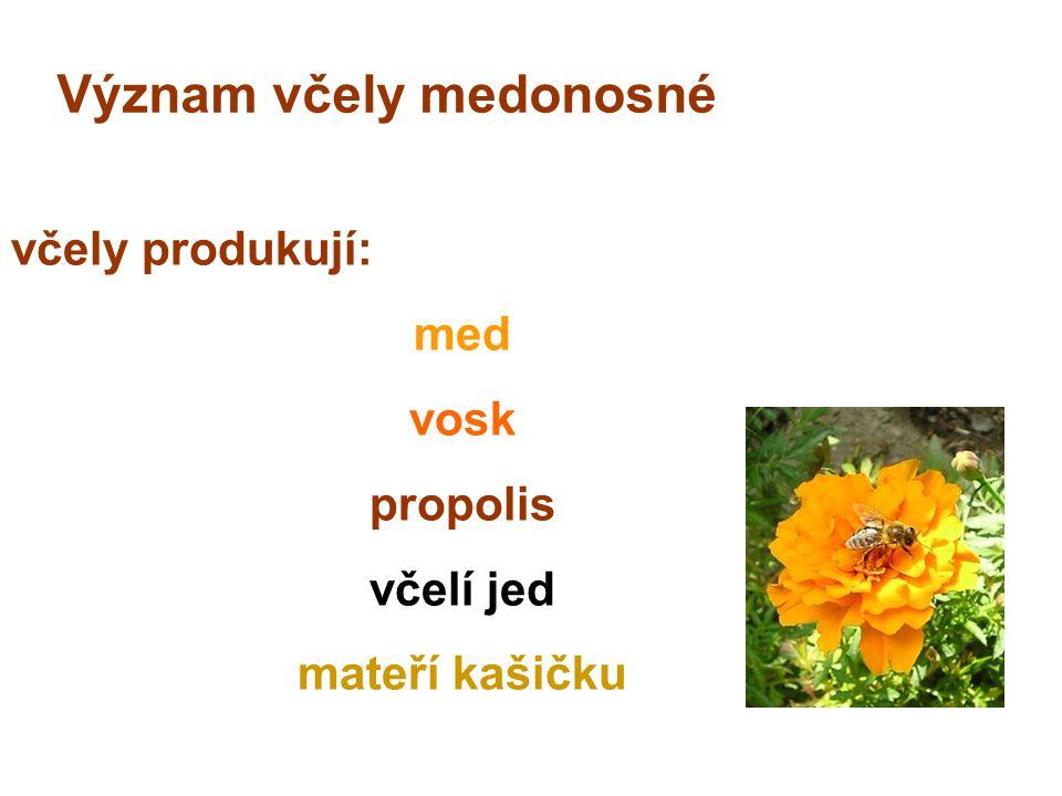 Význam včely medonosné včely produkují: med vosk propolis včelí jed mateří kašičku