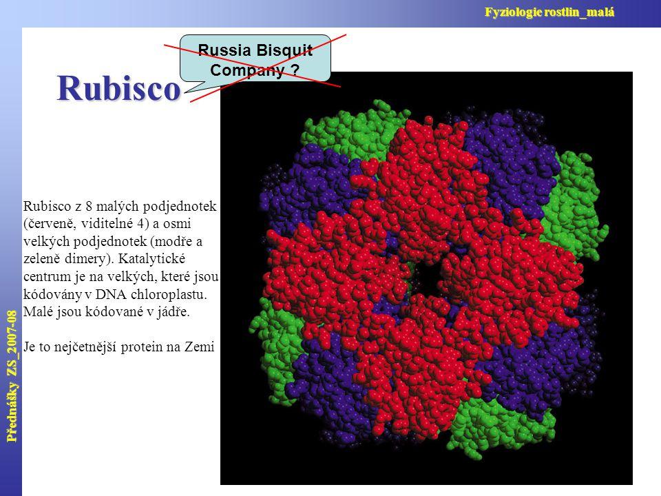 Rubisco Rubisco z 8 malých podjednotek (červeně, viditelné 4) a osmi velkých podjednotek (modře a zeleně dimery).