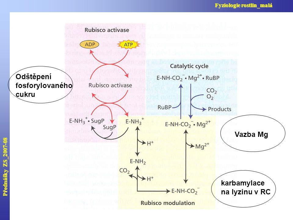 Přednášky ZS_2007-08 Fyziologie rostlin_malá Odštěpení fosforylovaného cukru karbamylace na lyzinu v RC Vazba Mg