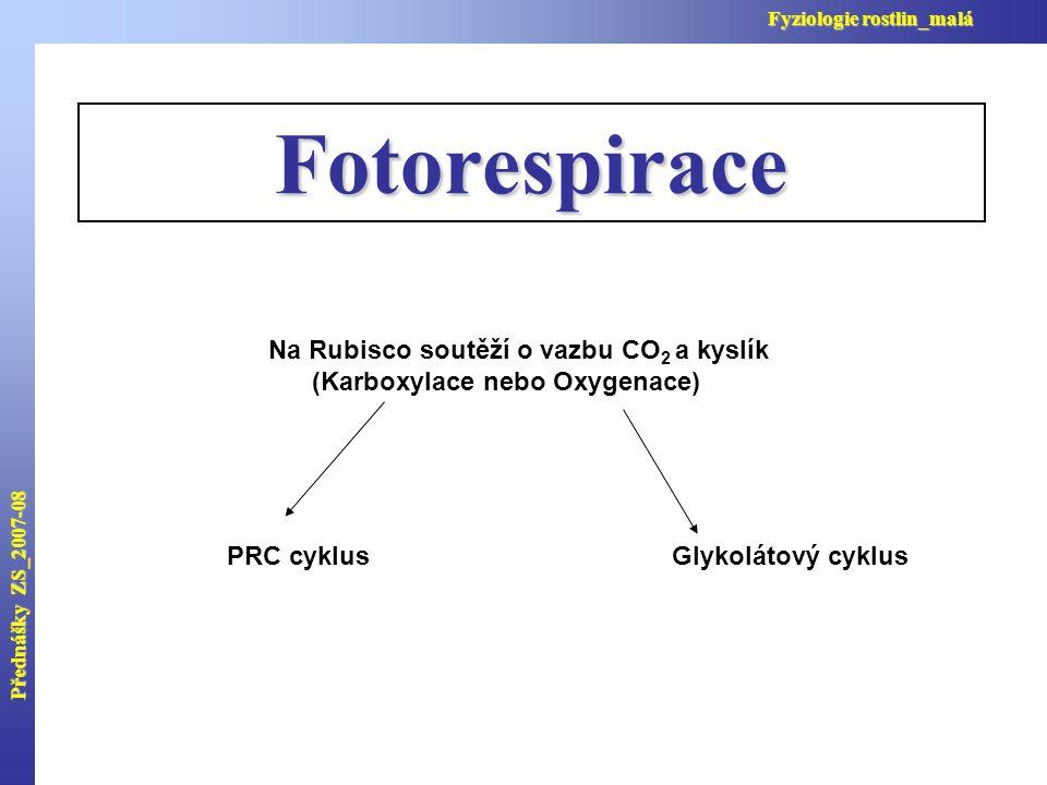 Přednášky ZS_2007-08 Fyziologie rostlin_malá Fotorespirace Na Rubisco soutěží o vazbu CO 2 a kyslík (Karboxylace nebo Oxygenace) PRC cyklusGlykolátový cyklus