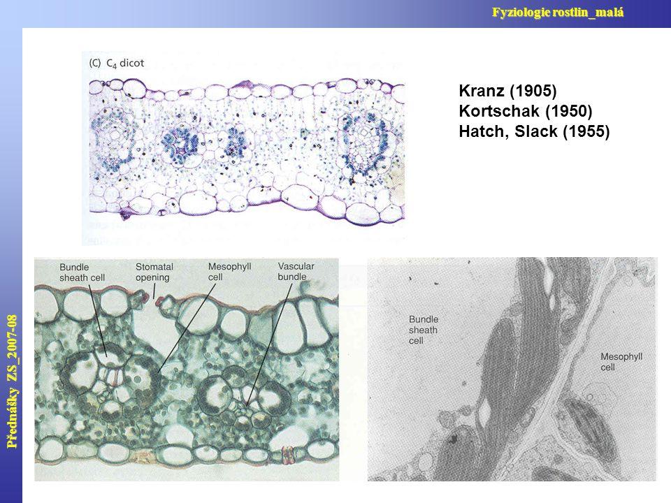 Přednášky ZS_2007-08 Fyziologie rostlin_malá Kranz (1905) Kortschak (1950) Hatch, Slack (1955)