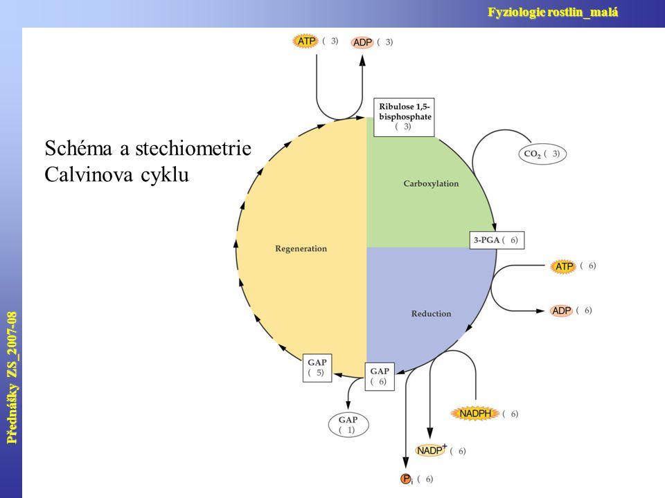 Schéma a stechiometrie Calvinova cyklu Přednášky ZS_2007-08 Fyziologie rostlin_malá