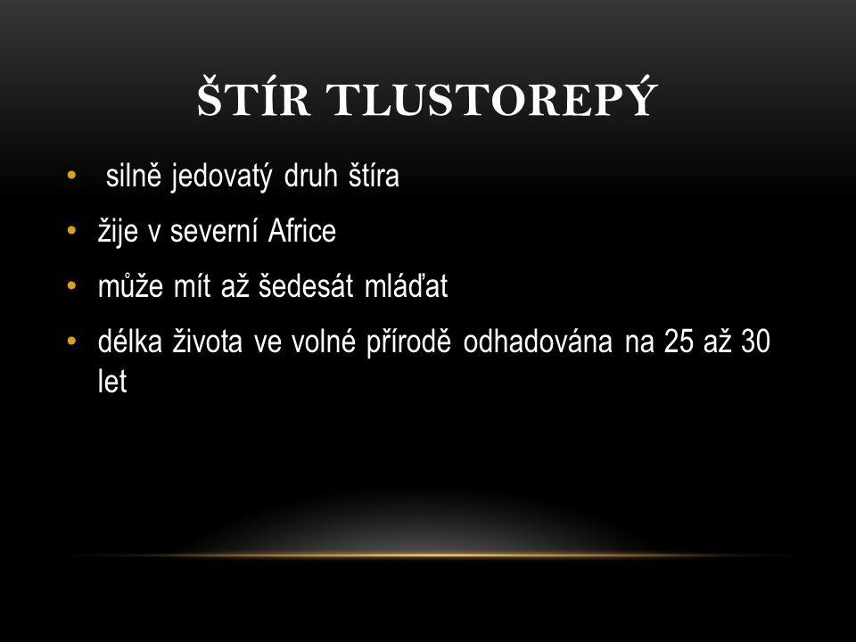 ŠTÍR KÝLNATÝ Kdysi se vyskytoval v ČR, ale dnes je nezvěstný Vyskytuje se v Albánii, Bosně a Hercegovině, Chorvatsku, Řecku, Itálii, Slovinsku, Turecku a Jugoslávii Dorůstá délky okolo 4 cm a jeho jed není pro člověka nebezpečný