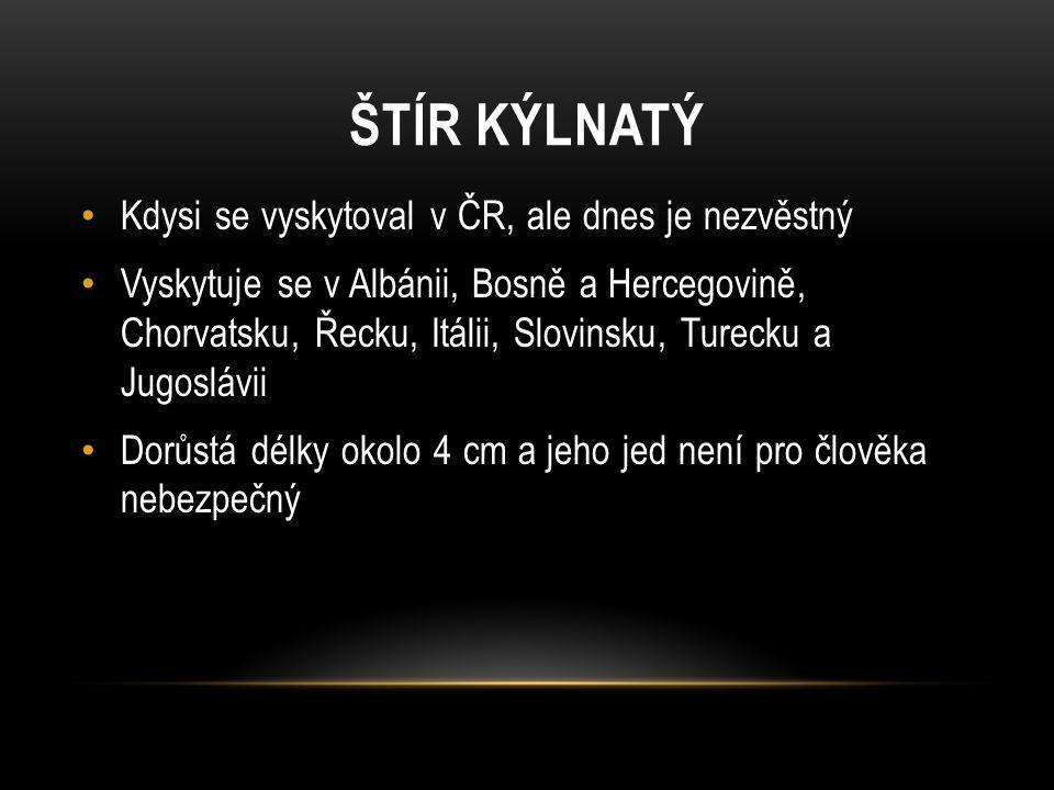 ŠTÍR KÝLNATÝ Kdysi se vyskytoval v ČR, ale dnes je nezvěstný Vyskytuje se v Albánii, Bosně a Hercegovině, Chorvatsku, Řecku, Itálii, Slovinsku, Tureck