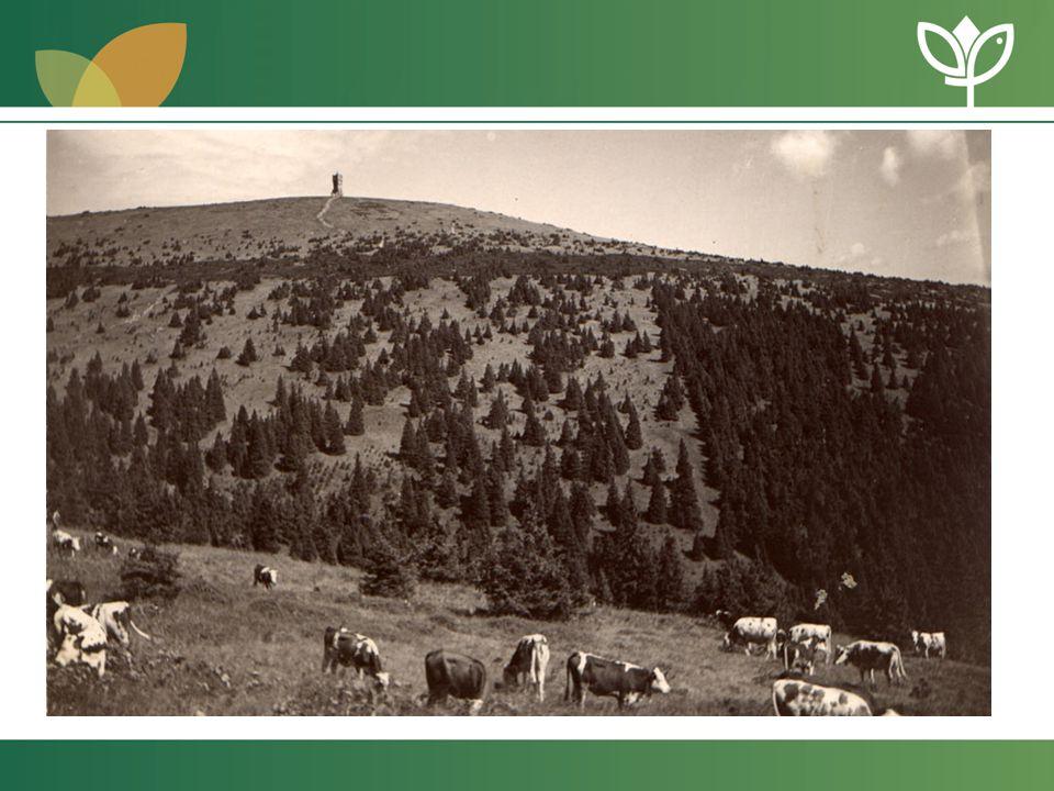 Aktivní management chráněných území Obnova pastvy Ovčárna Švýcárna