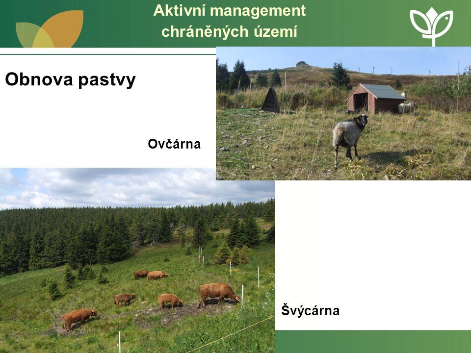 Aktivní management chráněných území Redukce kleče