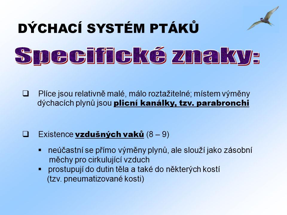 DÝCHACÍ SYSTÉM PTÁKŮ  Existence vzdušných vaků (8 – 9)  neúčastní se přímo výměny plynů, ale slouží jako zásobní měchy pro cirkulující vzduch  pros