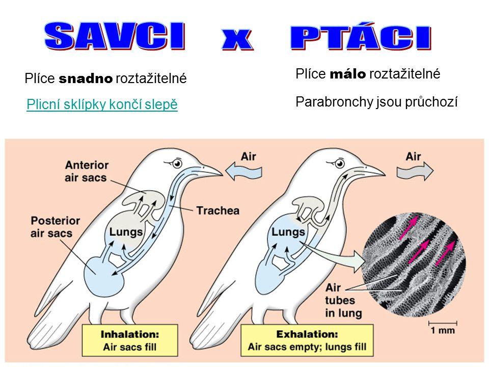 Plicní sklípky končí slepě Plíce snadno roztažitelné Plíce málo roztažitelné Parabronchy jsou průchozí