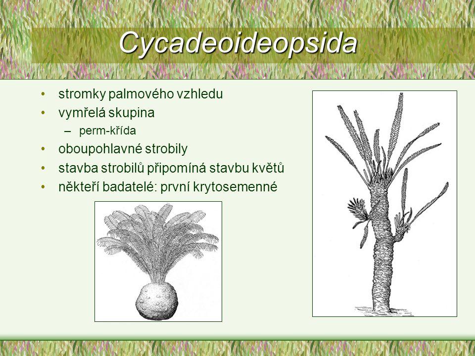 Cycadeoideopsida stromky palmového vzhledu vymřelá skupina –perm-křída oboupohlavné strobily stavba strobilů připomíná stavbu květů někteří badatelé: