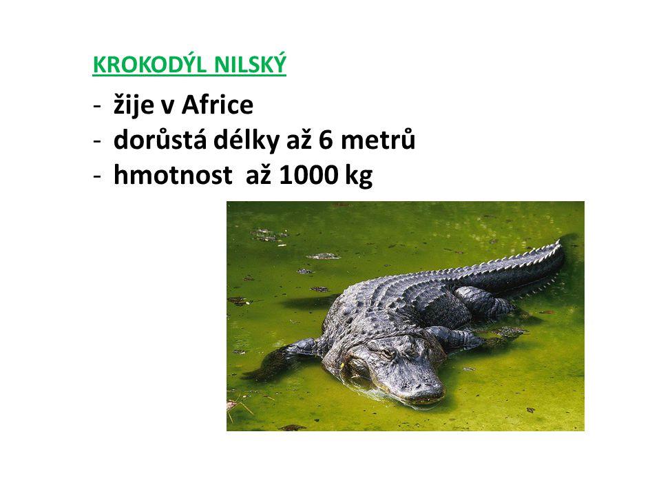 KROKODÝL NILSKÝ -žije v Africe -dorůstá délky až 6 metrů -hmotnost až 1000 kg