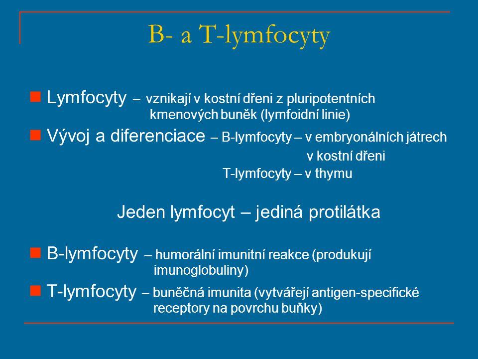 B- a T-lymfocyty Lymfocyty – vznikají v kostní dřeni z pluripotentních kmenových buněk (lymfoidní linie) Vývoj a diferenciace – B-lymfocyty – v embryo