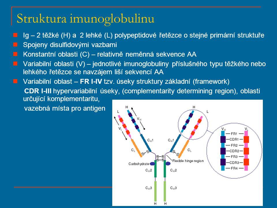 Struktura imunoglobulinu Ig – 2 těžké (H) a 2 lehké (L) polypeptidové řetězce o stejné primární struktuře Spojeny disulfidovými vazbami Konstantní obl
