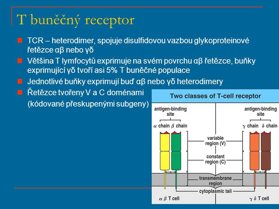T buněčný receptor TCR – heterodimer, spojuje disulfidovou vazbou glykoproteinové řetězce αβ nebo γδ Většina T lymfocytů exprimuje na svém povrchu αβ