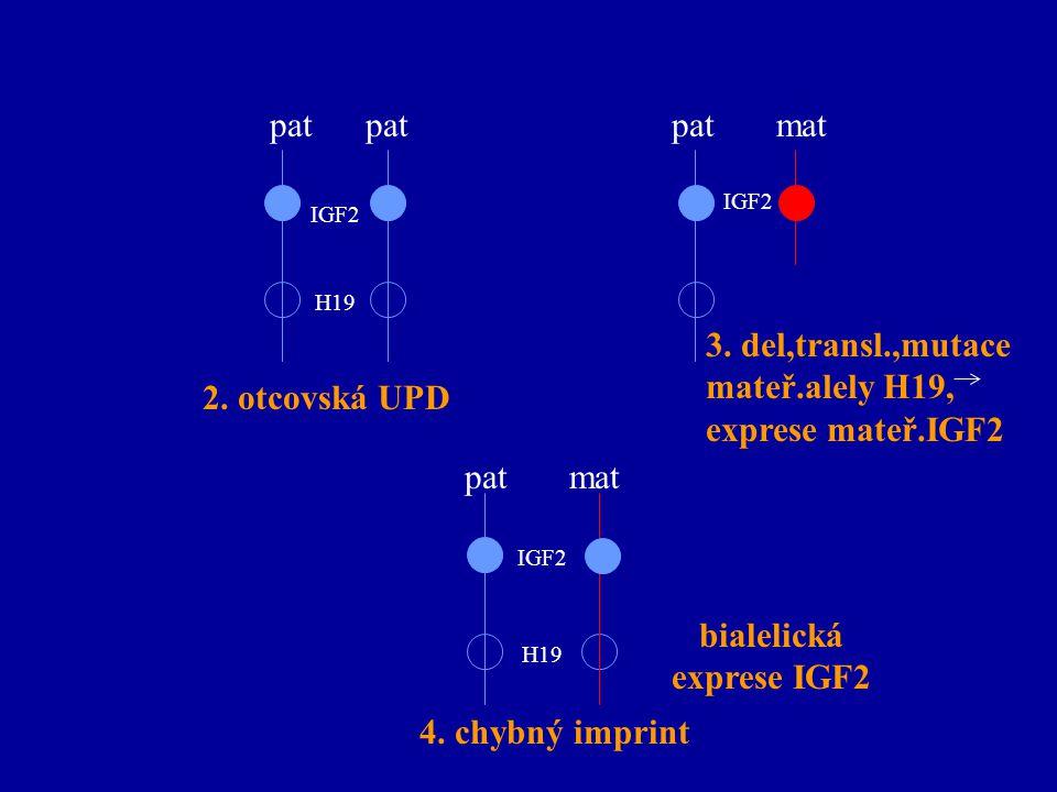 pat pat mat 2. otcovská UPD 3. del,transl.,mutace mateř.alely H19, exprese mateř.IGF2 pat mat 4. chybný imprint bialelická exprese IGF2 IGF2 H19 IGF2
