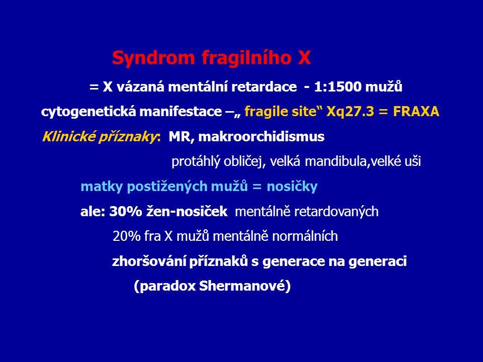 """Syndrom fragilního X = X vázaná mentální retardace - 1:1500 mužů cytogenetická manifestace –"""" fragile site"""" Xq27.3 = FRAXA Klinické příznaky: MR, makr"""
