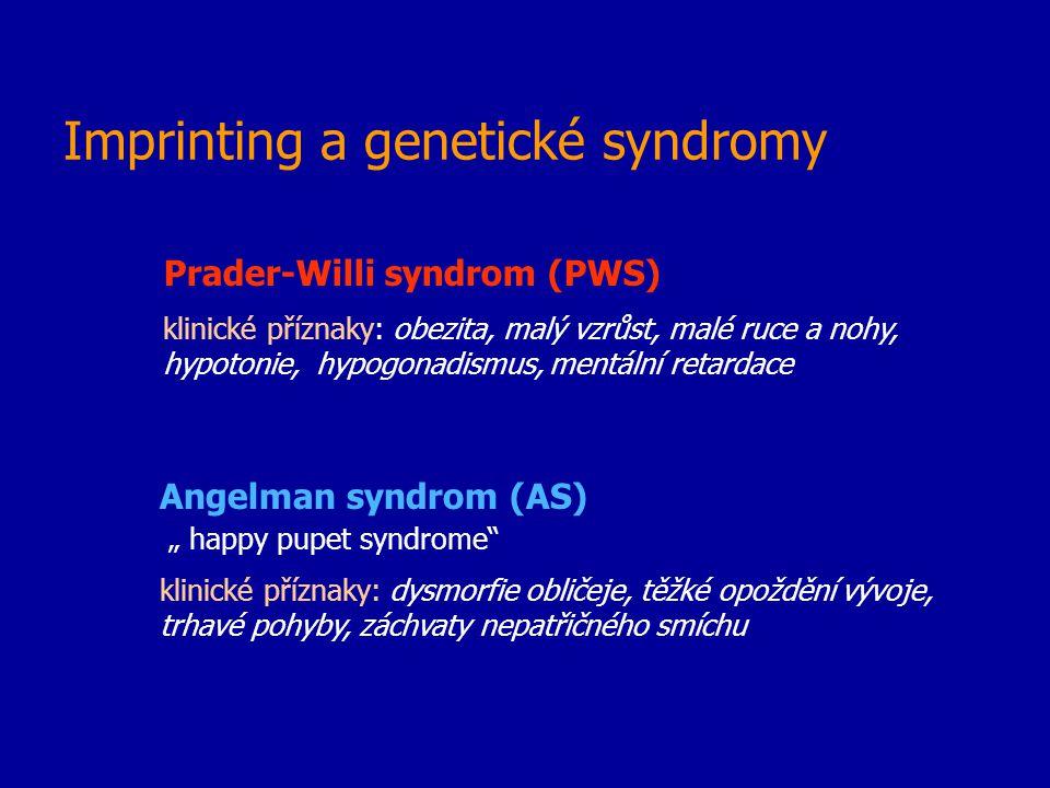 Imprinting a genetické syndromy Prader-Willi syndrom (PWS) klinické příznaky: obezita, malý vzrůst, malé ruce a nohy, hypotonie, hypogonadismus, mentá