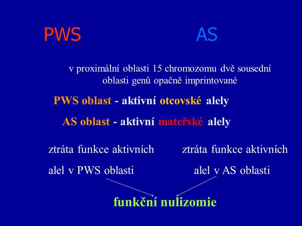 PWS AS ztráta funkce aktivních alel v PWS oblasti alel v AS oblasti funkční nulizomie v proximální oblasti 15 chromozomu dvě sousední oblasti genů opa