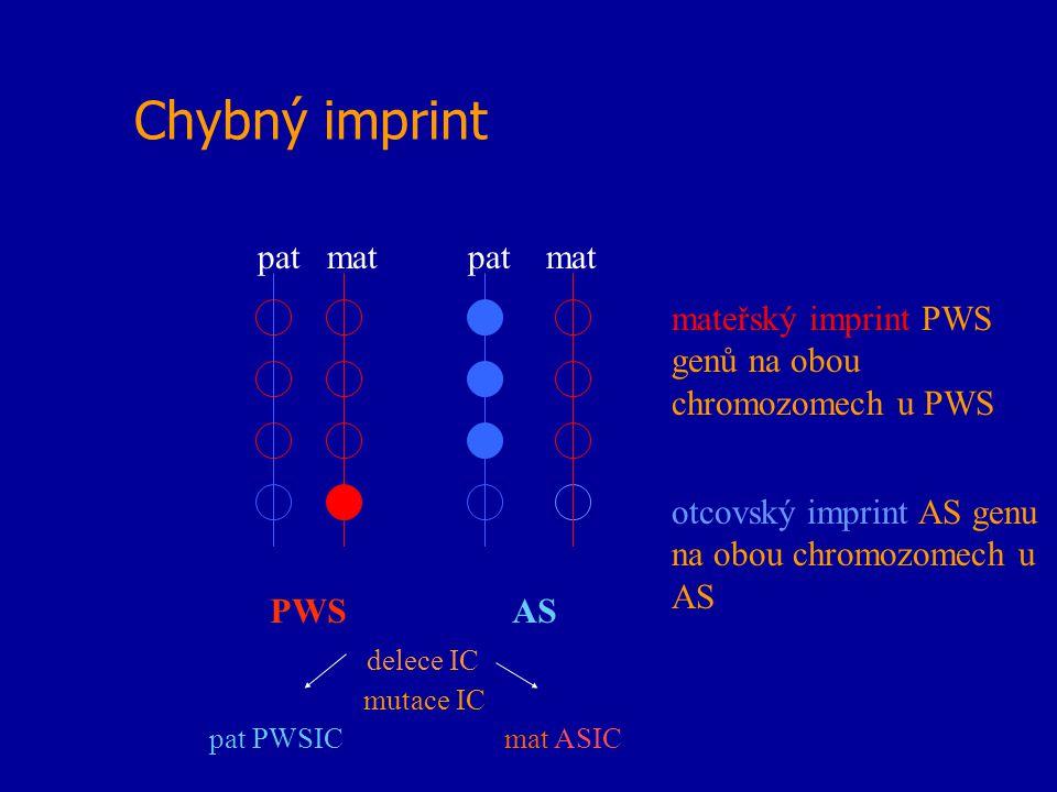 Chybný imprint pat mat PWS AS delece IC mutace IC pat PWSIC mat ASIC mateřský imprint PWS genů na obou chromozomech u PWS otcovský imprint AS genu na