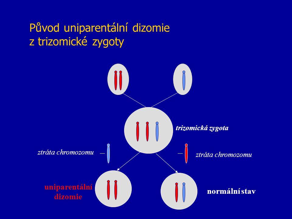 Původ uniparentální dizomie z trizomické zygoty trizomická zygota ztráta chromozomu uniparentální dizomie normální stav