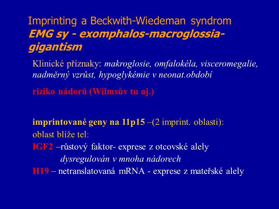 Imprinting a Beckwith-Wiedeman syndrom EMG sy - exomphalos-macroglossia- gigantism Klinické příznaky: makroglosie, omfalokéla, visceromegalie, nadměrn