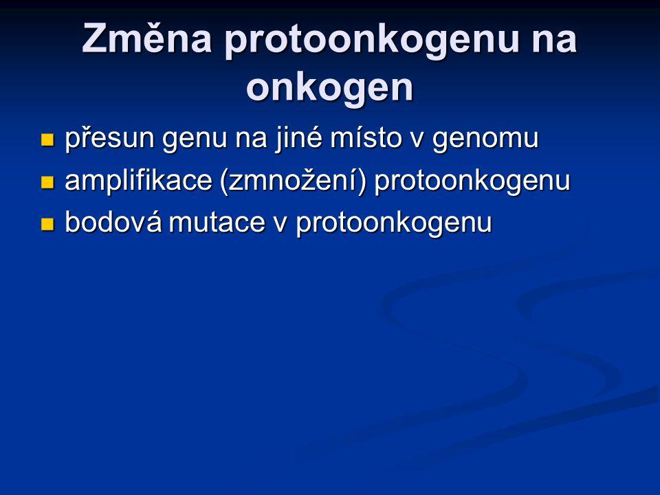 Změna protoonkogenu na onkogen Maligní buňky mají často chromozomové translokace, díky kterým se dostávají protoonkogeny do blízkosti silných promotorů a jsou přepisovány častěji.
