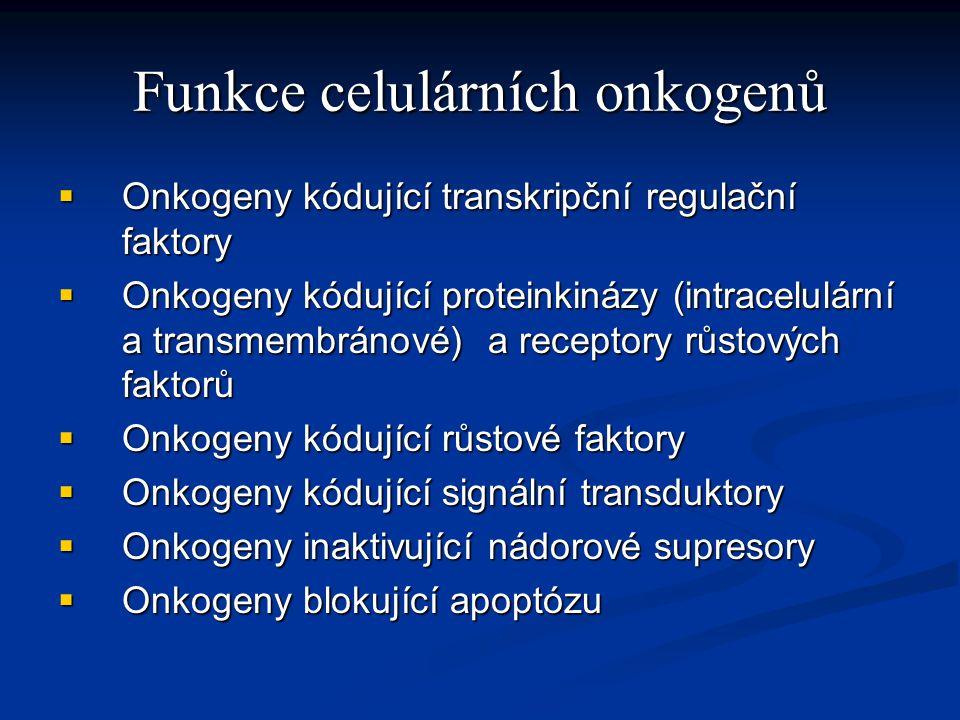 Ras protein Mutace ras proteinu až u 30% karcinomů Mutace ras proteinu až u 30% karcinomů Aktivovaný ras protein aktivuje dráhu tyrozinkináz vedoucí k růstu buněk Aktivovaný ras protein aktivuje dráhu tyrozinkináz vedoucí k růstu buněk Aktivní ras s navázaným GTP Aktivní ras s navázaným GTP Neaktivní ras s navázaným GDP (konverze pomocí GTPázy) Neaktivní ras s navázaným GDP (konverze pomocí GTPázy) Regulace exprese genu – změny v komplexním chování buněk – proliferace a difenciace Regulace exprese genu – změny v komplexním chování buněk – proliferace a difenciace Typické vyústění signalizační dráhy ras Typické vyústění signalizační dráhy ras