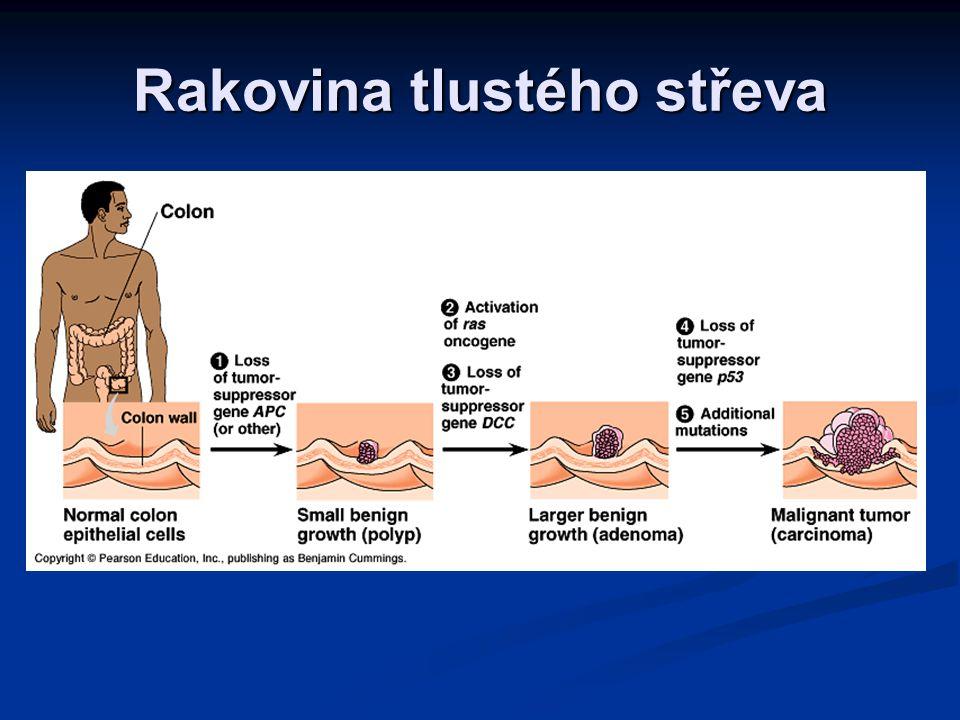 Vznik kolorektálního karcinomu (10-20 let) Normální epitel Nadměrné množení epitelu Malý benigní nádor Velký nádor Prorůstajícíi nádor Metastázy Tumor-supresorový gen (APC) chybí Aktivovaný onkogen (ras) Tumor-supresorový gen (DCC) chybí Tumor-supres.