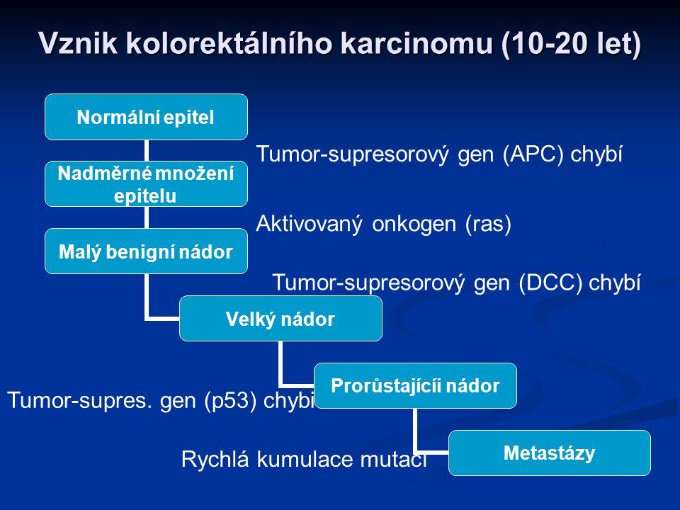 Rakovinu způsobí až mnohonásobná mutace tumor supresorové alely jsou většinou recesivní - musí tedy zmutovat obě tumor supresorové alely jsou většinou recesivní - musí tedy zmutovat obě naopak onkogeny jsou většinou dominantní - stačí, aby zmutovala jedna naopak onkogeny jsou většinou dominantní - stačí, aby zmutovala jedna nakonec je aktivován gen pro telomerázu nakonec je aktivován gen pro telomerázu