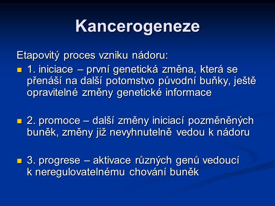 Kancerogeneze Podle toho, v jaké fázi působí, se kancerogeny popisují jako iniciátory a promotory - iniciátory – jsou genotoxické - iniciátory – jsou genotoxické - promotory nejsou genotoxické (peroxidy, katecholaminy, nitrofurany, chronické dráždění) - promotory nejsou genotoxické (peroxidy, katecholaminy, nitrofurany, chronické dráždění)