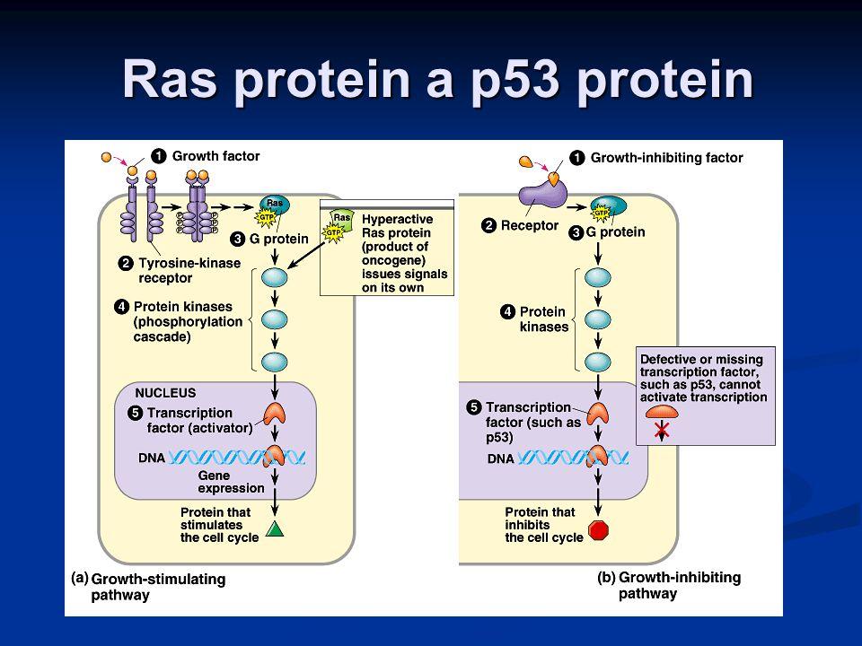 Ras protein a p53 protein