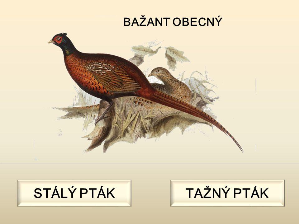 POUŽITÉ ZDROJE: [cit.2011-02-20]. Dostupný pod licencí Creative Commons na WWW: SZEPANEK, Marek.