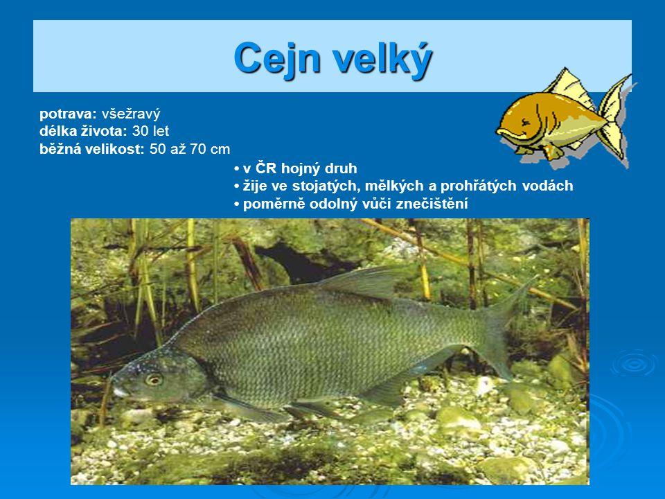 Lín obecný potrava: všežravý délka života: 10 let běžná velikost: 50 až 70 cm velmi drobné šupiny