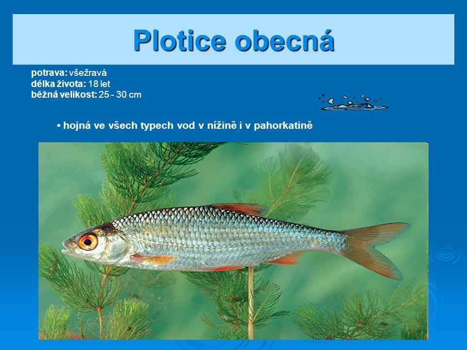 Významné mořské ryby
