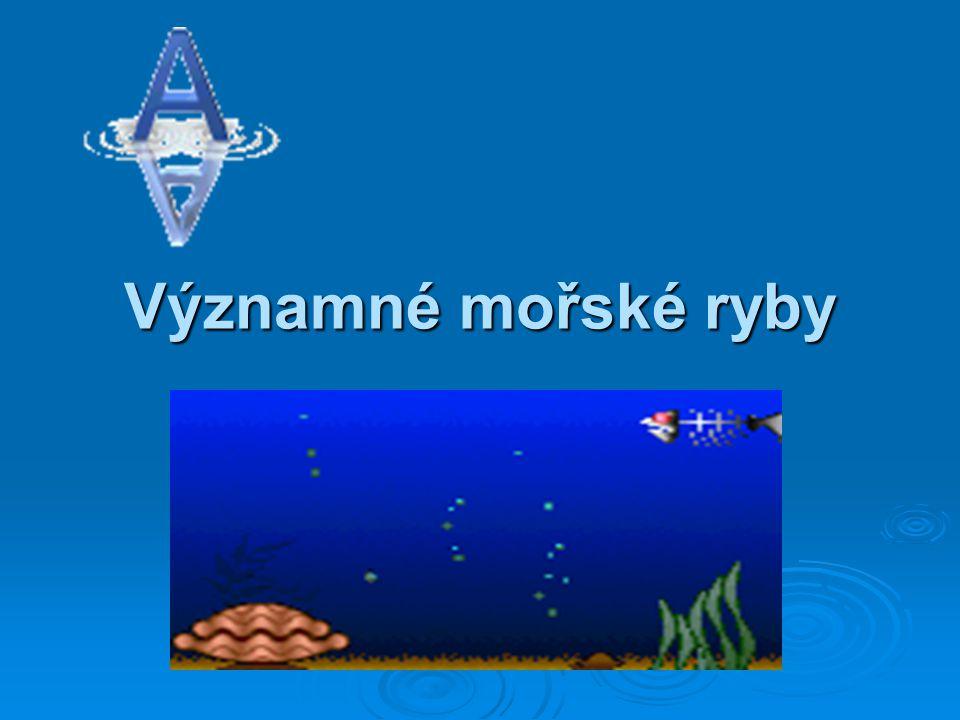 Sleď obecný potrava: planktonem a malými rybkami délka života: 3 až 9 let běžná velikost: 45 cm