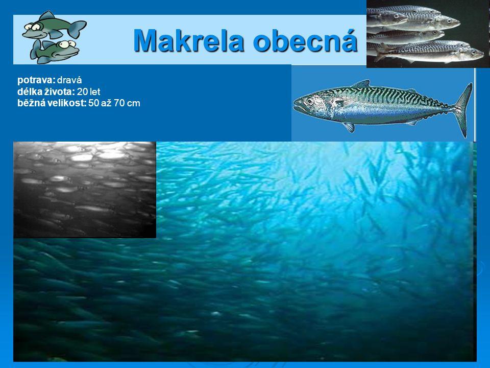 Treska obecná potrava: na začátku planktonem, později dravá délka života: 25 let běžná velikost: až 2 m, hmotnost 90 kg